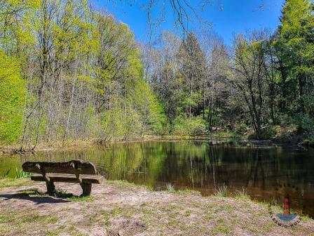 Wanderweg Mönkloh Waldlehrpfad Hasselbusch See