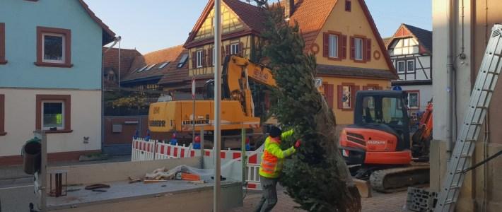 Der Christbaum steht, die Weihnachtszeit kann kommen