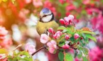 De lente kan komen