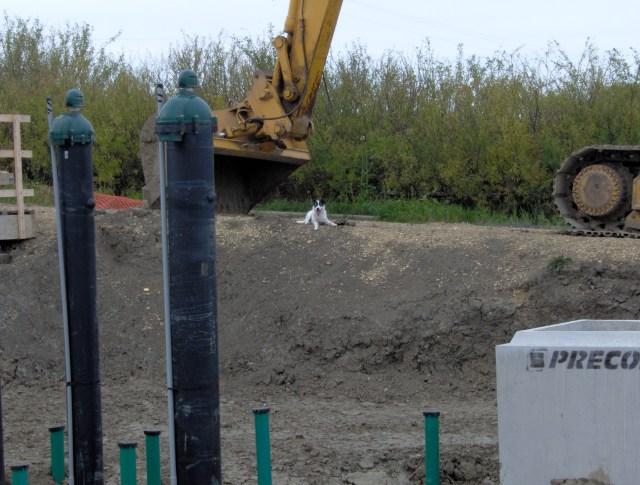 2013 09 02 Magic guarding jess taking photos of upgrades to Rosebud water reservoir