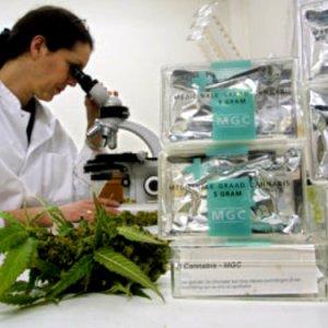 Cannabis terapeutica: anche in Italia?
