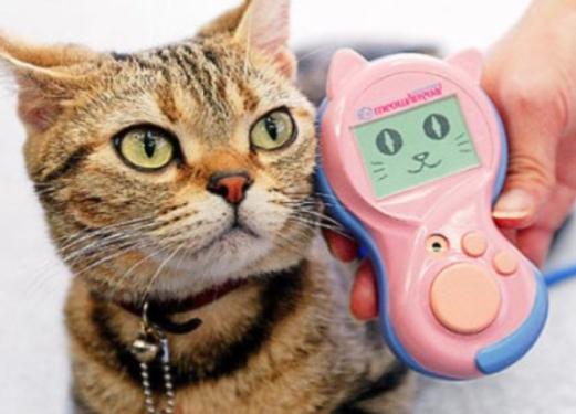 Traduttore per gatti