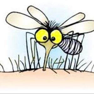 L'uomo che odiava le zanzare