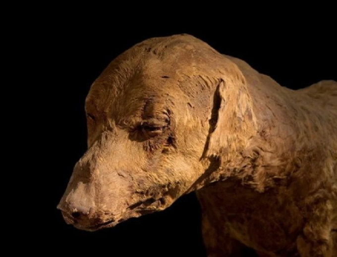 Museo Egizio di Torino Mummie