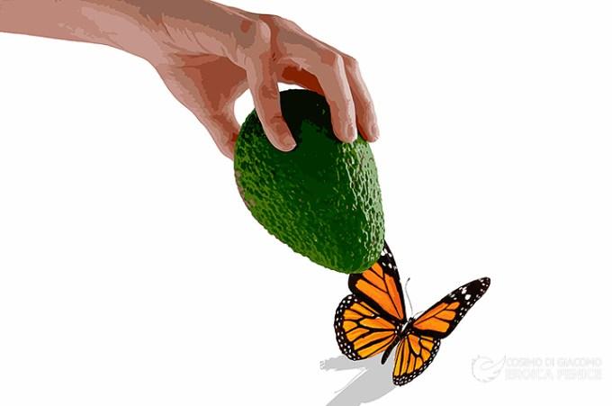 Avocado, il frutto proibito nel paniere Istat
