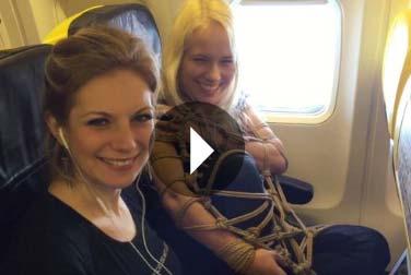 Bondage im Flugzeug