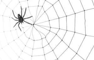 Der Erstkontakt: Eine Fliege im Spinnennetz?