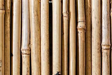 Kleine Peitschenkunde - Der Rohrstock