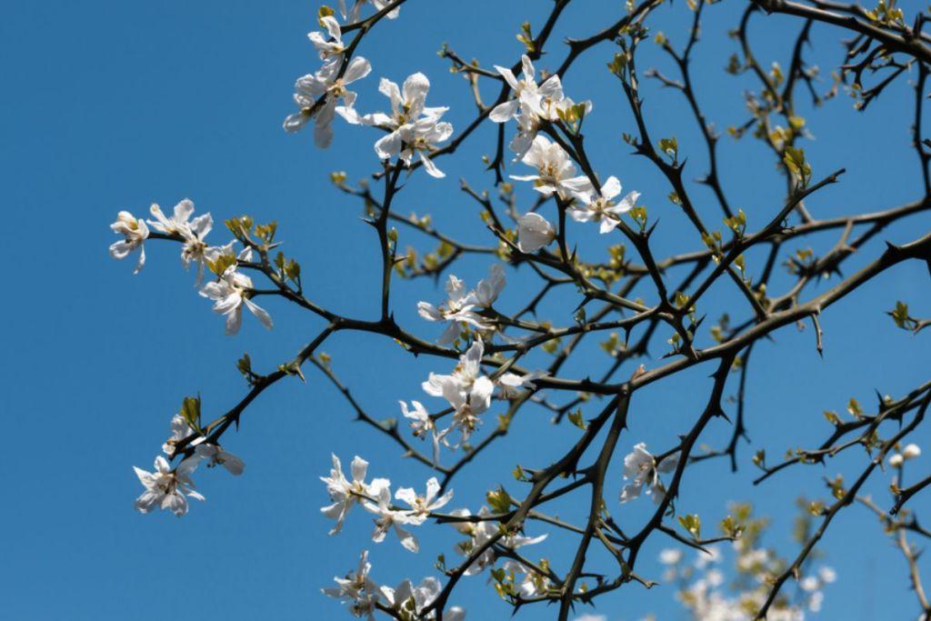 orange-blossoms-honeymoon-guide
