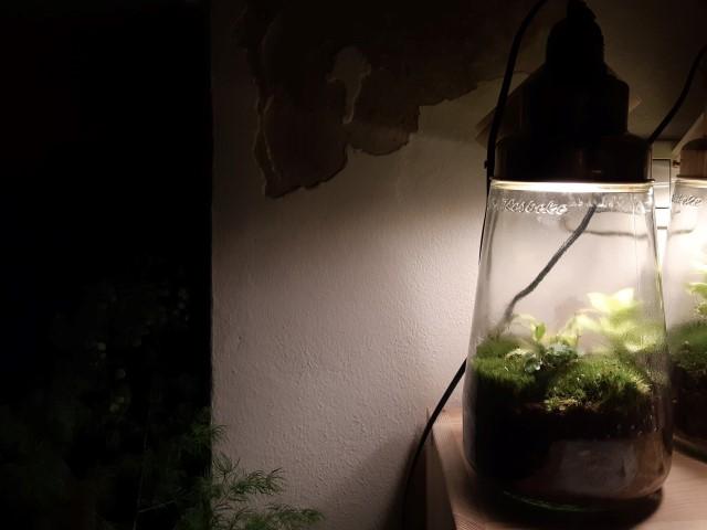 lanterna - pickle di spruitje