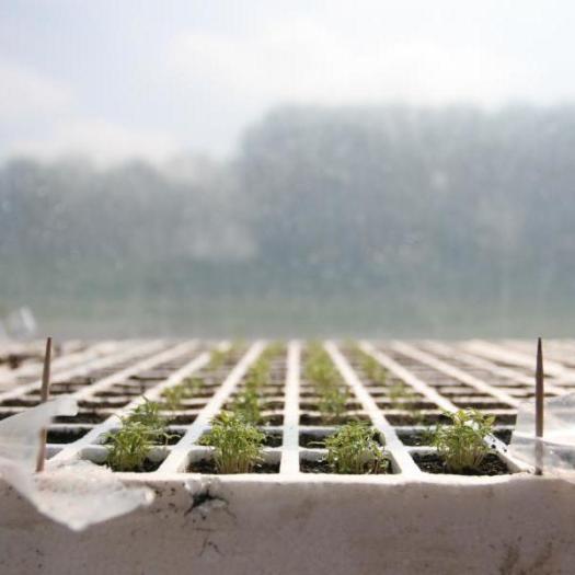come si semina - consigli per le semine - R nel bosco