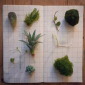 piante - categoria prodotto - negozio online - R nel bosco
