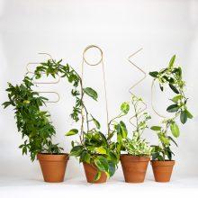 supporti per piante - Golden plant stake - R nel bosco
