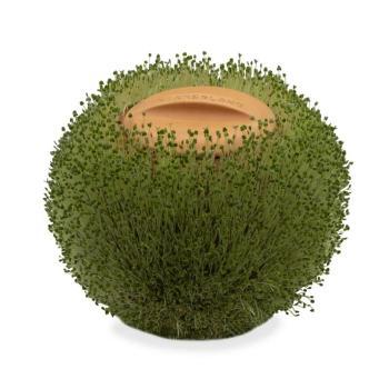 green orb terracotta planter - germinatore sferico - R nel bosco