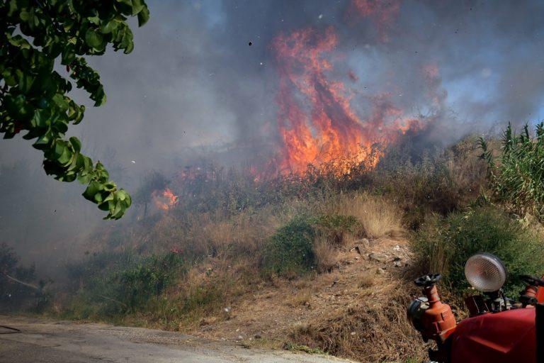 Σε εξέλιξη η φωτιά στην Αχαΐα: Καίει δάση στην περιοχή της Δροσιάς