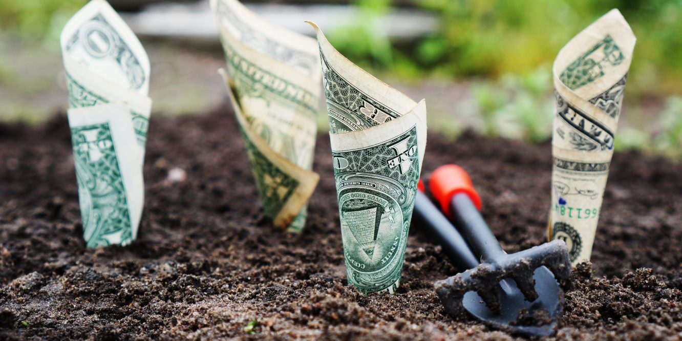 US 1 dollar bills rolled up into cones and planted in freshly turned soil.