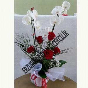 saksı çiçeği güller orkideler