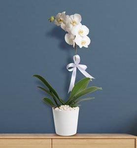seramik vazoda tekdal orkide