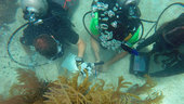 Marine_science_training_for_NEEMO_small.jpg
