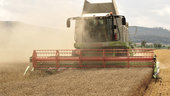 Wheat_harvest_small.jpg