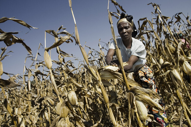 Joining forces to address food security