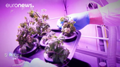 ESA_Euronews_Growing_food_in_space_small.png