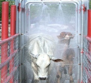 Cow Wash Race Sprayer Kenya For African Business