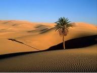 deserto, produção, frutos, bênçãos, jesus, tentação