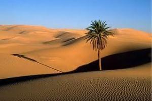 O que o deserto pode produzir?