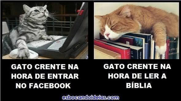 Gato crente no Facebook e lendo a Bíblia