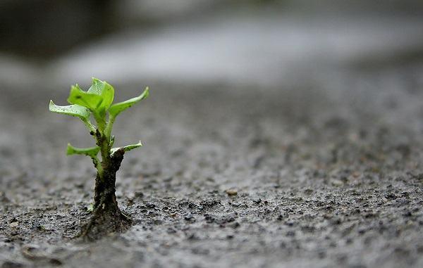 5 razões para recomeçar quando você sofrer uma derrota