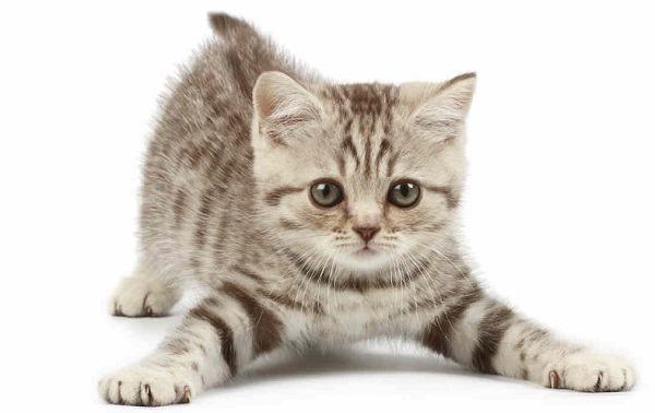 Ilustrações Cristãs: O gato que parece crente e o crente que parece gato