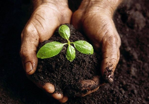 O que significa a lei da semeadura na Bíblia?
