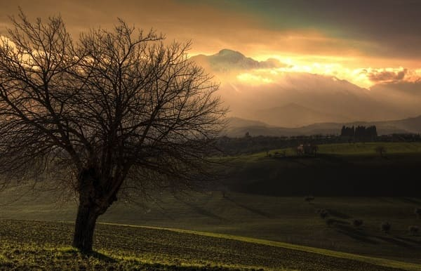 Por que Jesus amaldiçoou a figueira sem frutos?