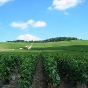 Vignes près d'Epernay en Champagne-Ardenne. By Tom Corser