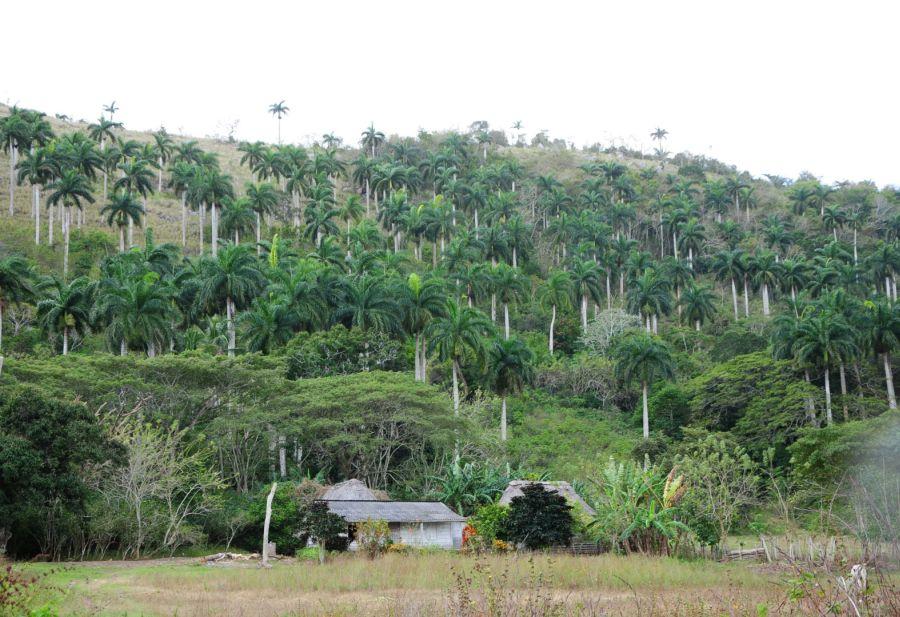 sancti spiritus, medio ambiente, bamburanao, guamuhaya, pnud, programa de las naciones unidas para el desarrollo