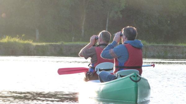 Observation ornitologique en canoe