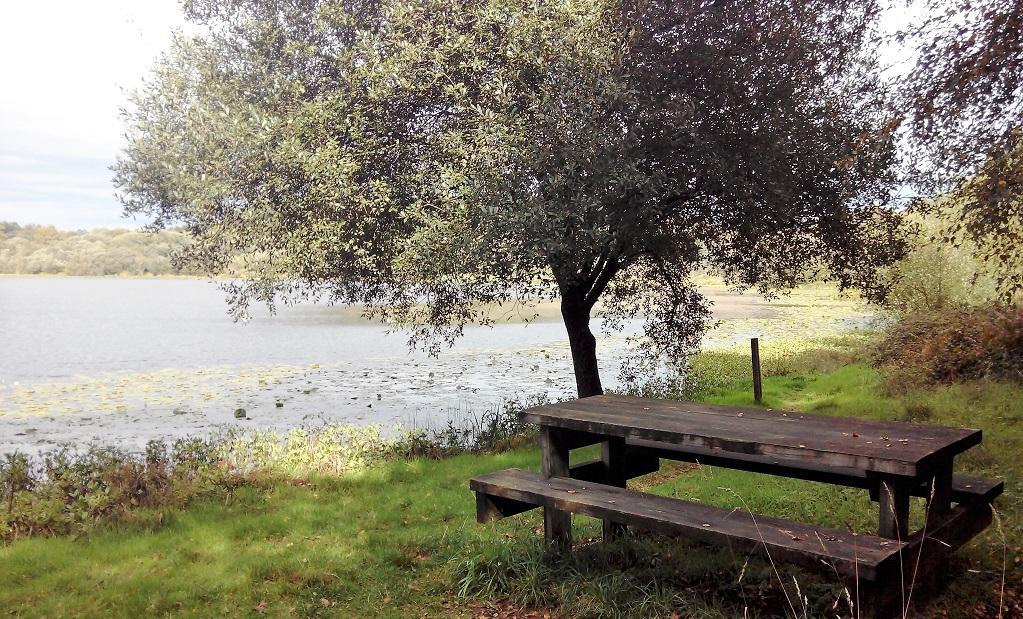 Un paseo entre castaños: la laguna de Sobrado, con niños