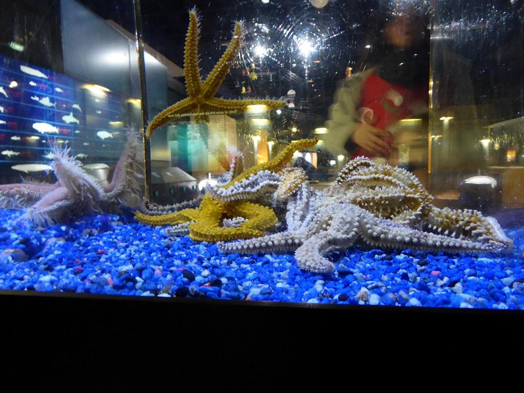 El Aquarium de A Coruña, con niños