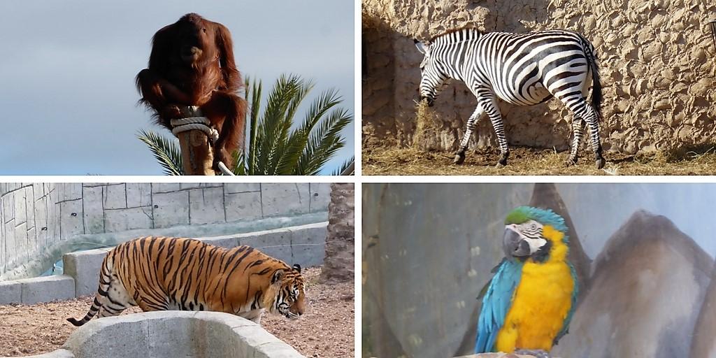 De safari con niños: el zoo de Elche
