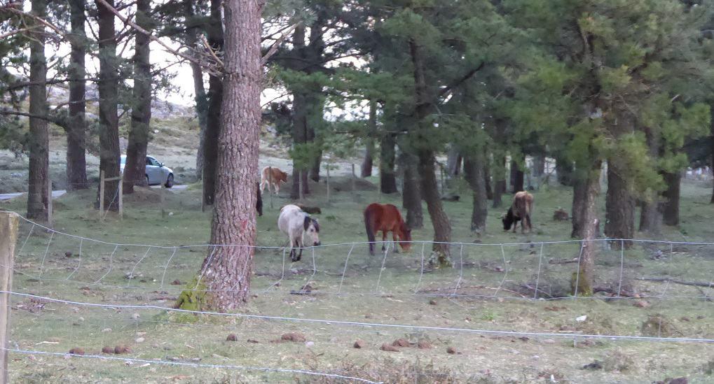 Barbanza con niños caballos