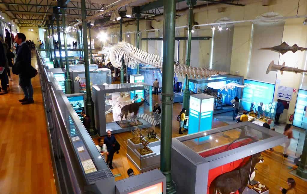 Madrid con niños: el Museo de Ciencias Naturales