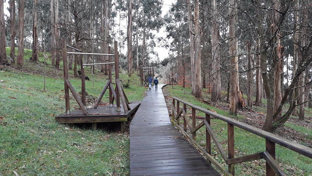 El Bosque de Liáns con niños