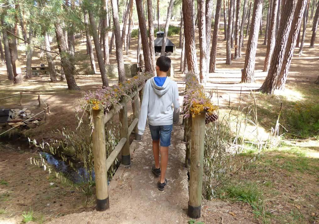 Bosque para ir con niños con gnomos y hadas