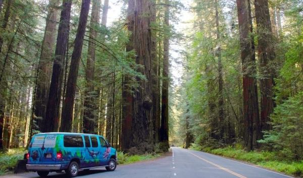 Avenue of the Giants Road Campervan