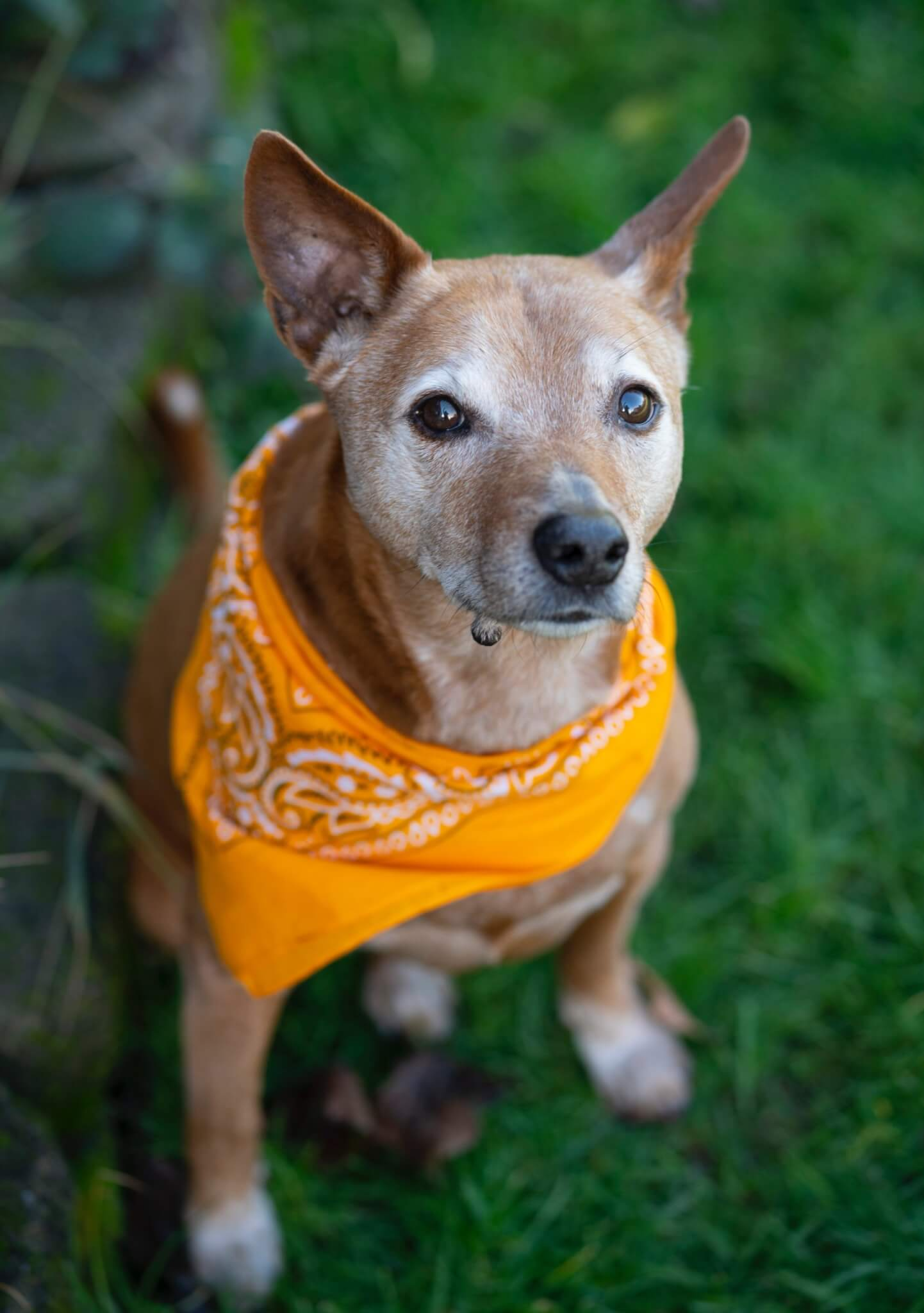 Dog with a bandana.