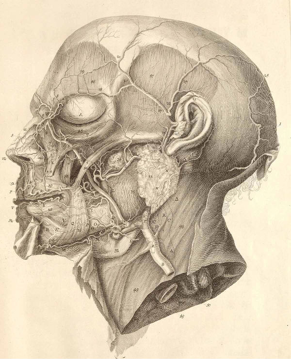 Dream Anatomy: Science, Speculation, and Art | Escape Into Life