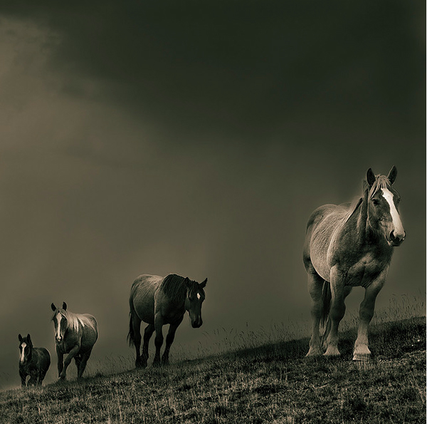 Ten of my favourite contemporary photographers for 2011 - 10_EscapeIntoLife