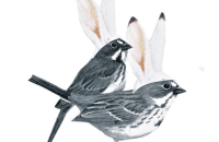 bayley_collins_two_birds_w_bunny_ears_collage