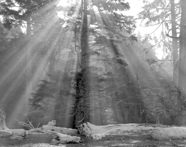 William Lemke, Suns Rays Rialto Beach